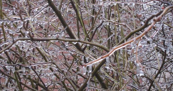 12 - Iced Tree