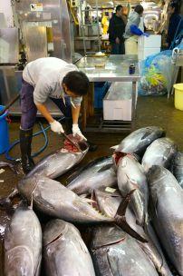 Tsukiji Fish Market - 1