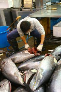 Tsukiji Fish Market - 2