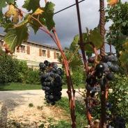 Meneghetti vineyards