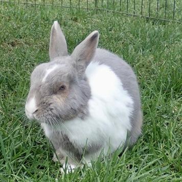 A bunny @Shelburne Farm VT