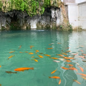 Fishies @ Fora Roma