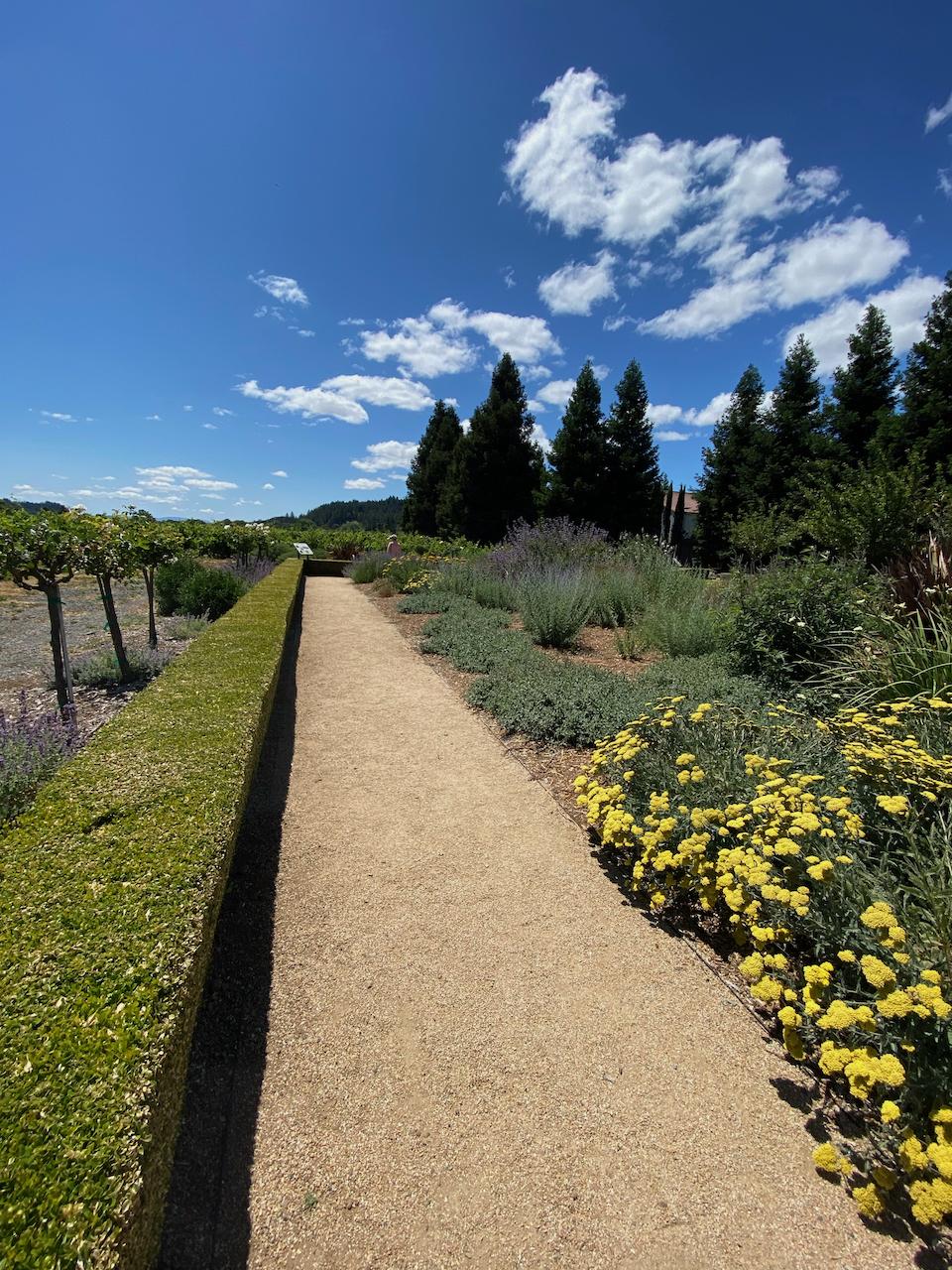 @Dry Creek Vineyards